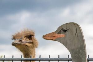 Perfil falso - foto de um ganso real e um ganso de madeira ao lado